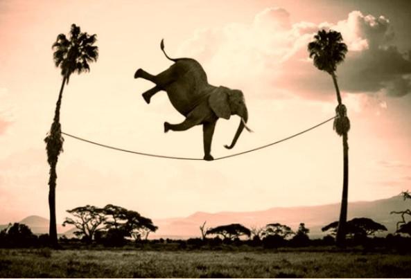 elefante-e-a-corda3